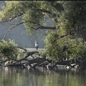 Nationaal Park Biesbosch